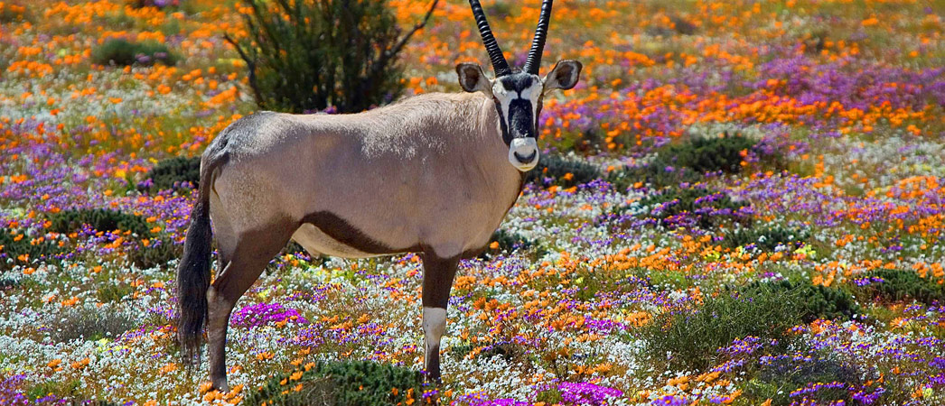 Springbok, Namakwa, Northern Cape, South Africa, www.springbok-information.co.za
